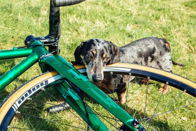 Canine 'Cross: Mercredi Bikes Sausage Dog CX